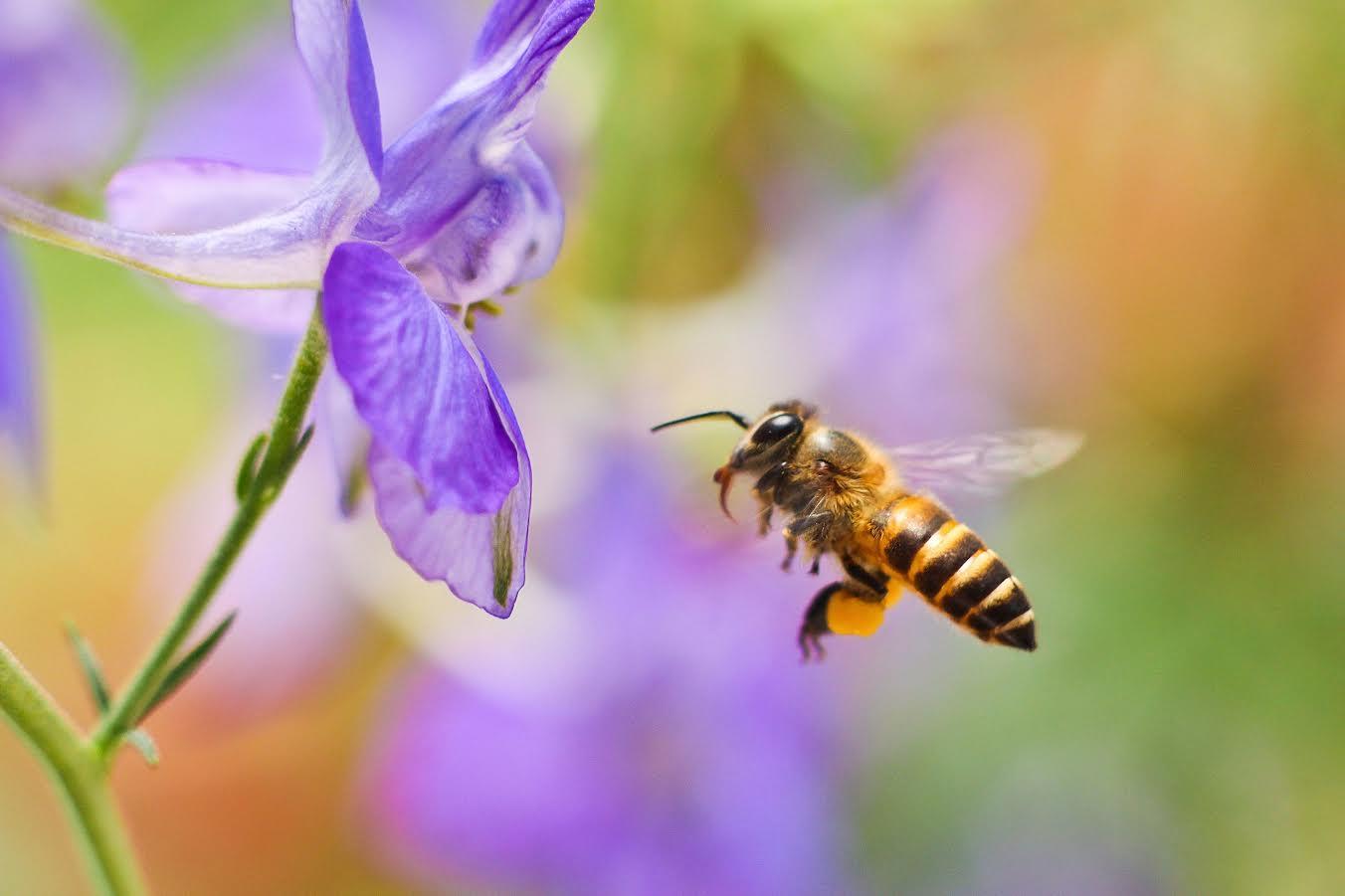 Här finns en halv miljon friska och starka bin