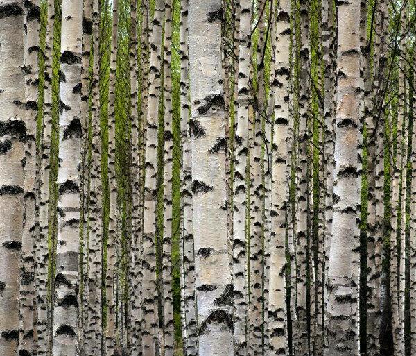 Vi hjälper dig gärna med rådgivning, röjningar och gallringar i löv- och ädellövskog.