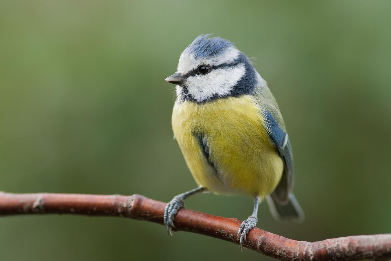 Lyssna på fåglarnas kvitter på Branta Berg