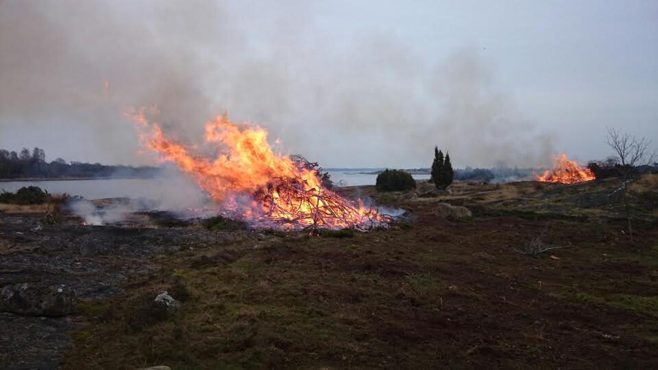 Naturvårdsröjningar, stängsling och lövskogsskötsel